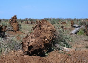 Threat of Xylella fastidiosa - 7 Reasons Why You Should Care!