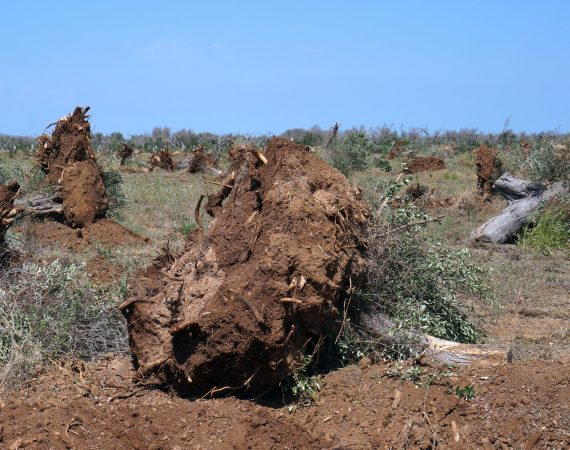 impact of Xylella