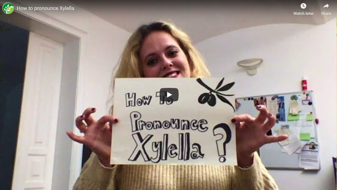 how to pronounce xylella